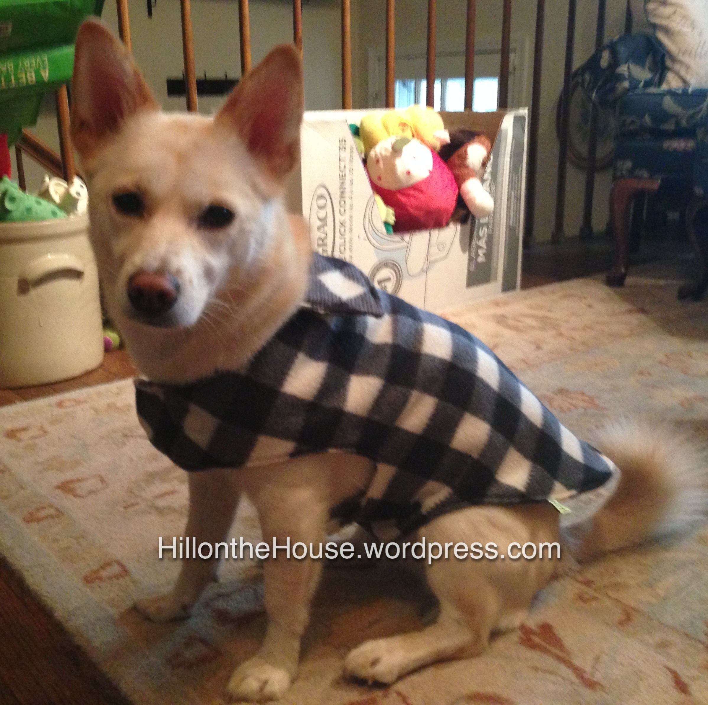 image about Dog Coat Sewing Patterns Free Printable called canine coat Hill upon the Home